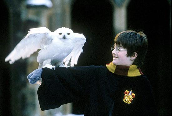 """O ator Daniel Radcliffe com coruja durante as filmagens de """"Harry Potter e a Pedra Filosofal"""", inspirado na série"""